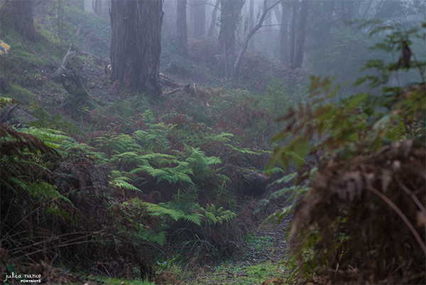 Beautiful bushland surrounding Julia Nance Portraits studio