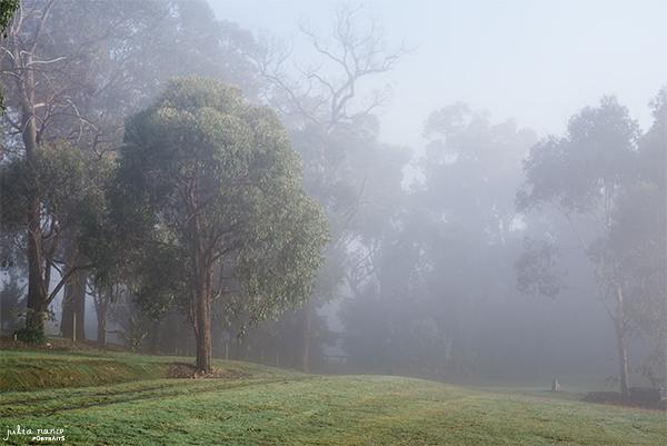 Beautiful Nature and fields surrounding Julia Nance Portraits Studio