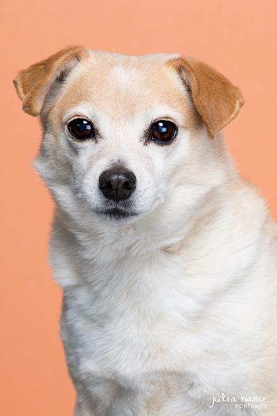 Studio Pet Photography Melbourne - Dog Photography